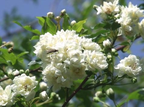 画像ー222初夏の庭の風景 006-2