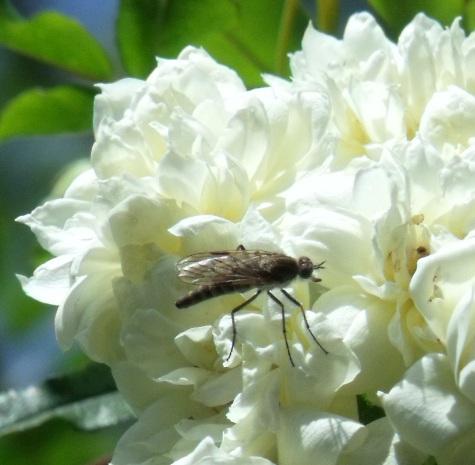 画像ー222初夏の庭の風景 006-3