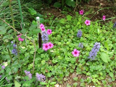 画像ー222初夏の庭の風景 015-2