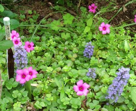 画像ー222初夏の庭の風景 015-3