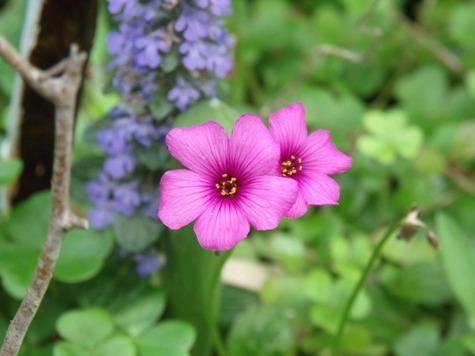 画像ー222初夏の庭の風景 017-2