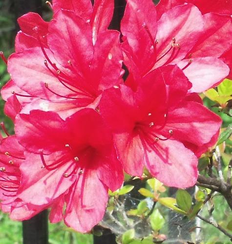 画像ー222初夏の庭の風景 023-4