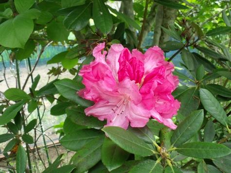 画像ー222初夏の庭の風景 013-2