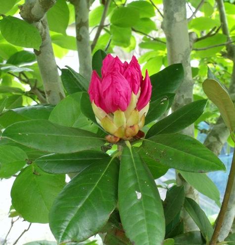 画像ー222初夏の庭の風景 014-2