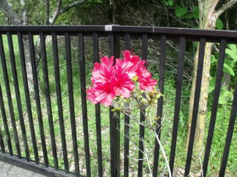 画像ー222初夏の庭の風景 023-2