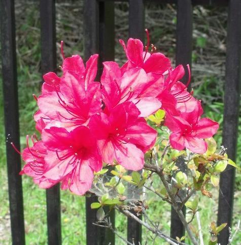 画像ー222初夏の庭の風景 023-3