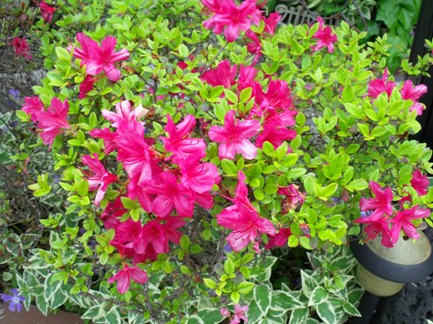 画像ー222初夏の庭の風景 025-2
