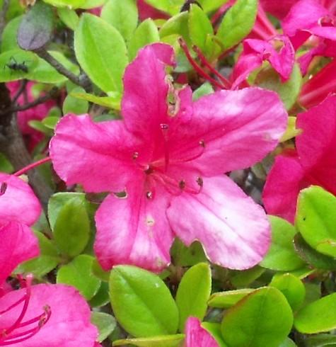 画像ー222初夏の庭の風景 025-4