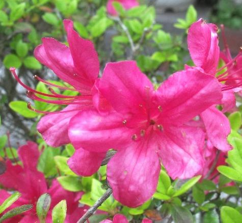 画像ー222初夏の庭の風景 026-2