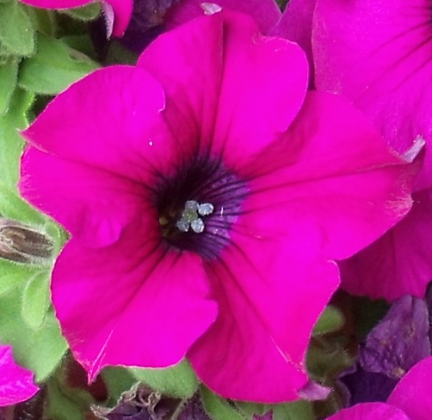画像ー222初夏の庭の風景 029-4
