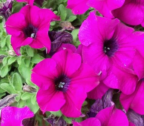 画像ー222初夏の庭の風景 029-3