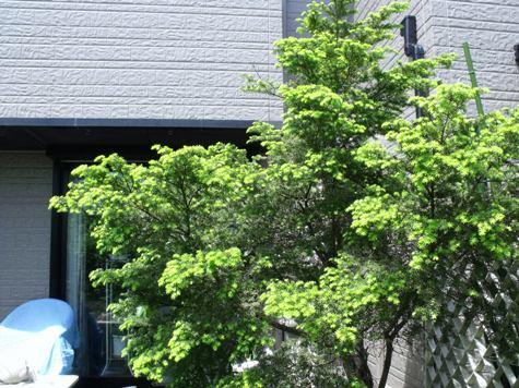 画像ー222初夏の庭の風景 009-2