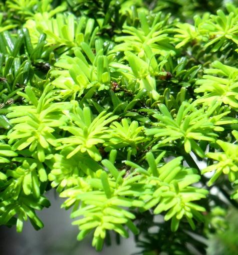 画像ー222初夏の庭の風景 010-3