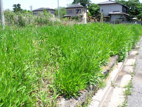 画像ー222初夏の庭の風景 044-2