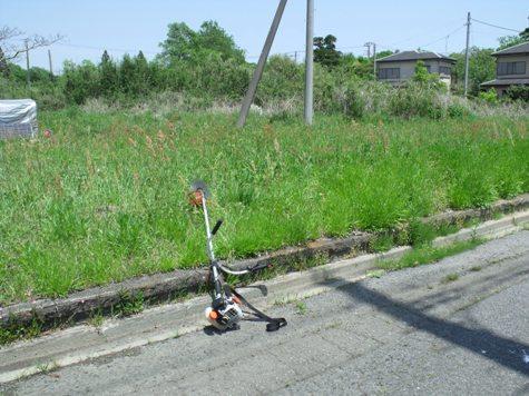 画像ー222初夏の庭の風景 040-2