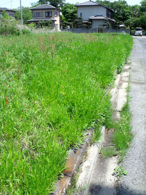 画像ー222初夏の庭の風景 043-2