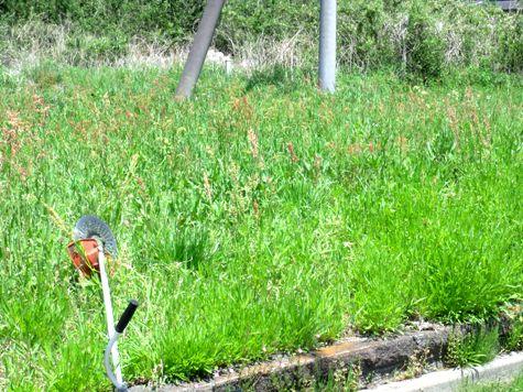 画像ー222初夏の庭の風景 041-2