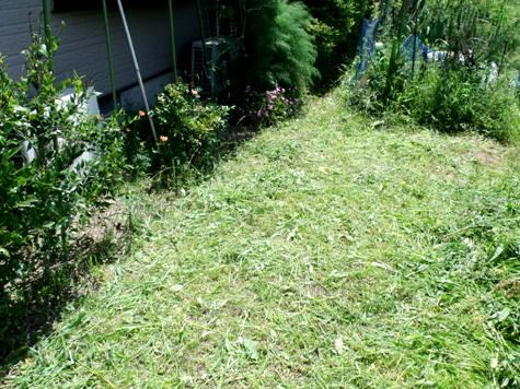 画像ー222初夏の庭の風景 050-2