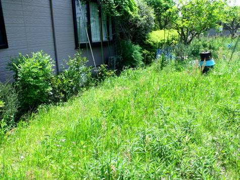 画像ー222初夏の庭の風景 045-2