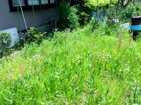 画像ー222初夏の庭の風景 046-2