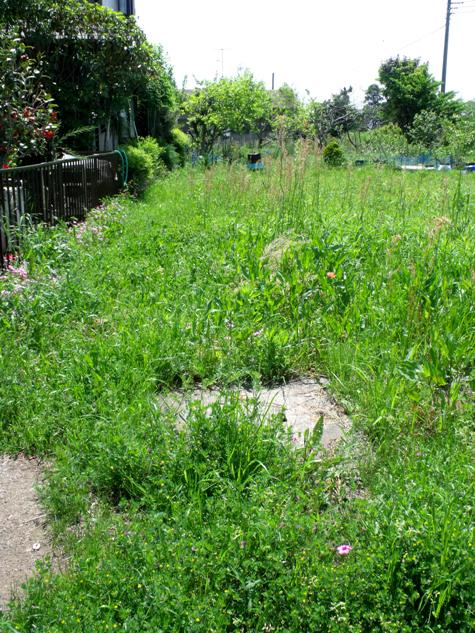 画像ー222初夏の庭の風景 047-2
