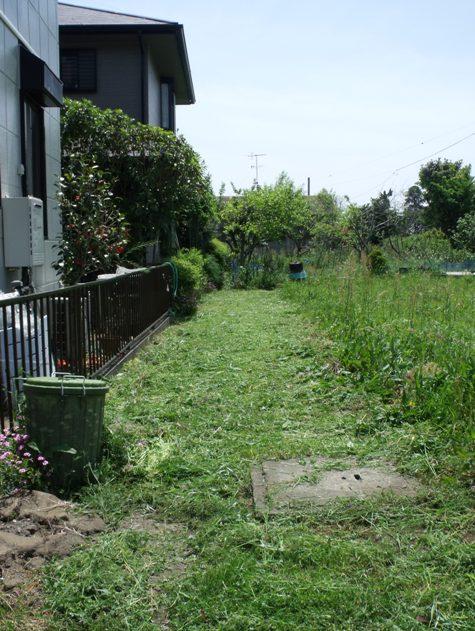 画像ー222初夏の庭の風景 048-2