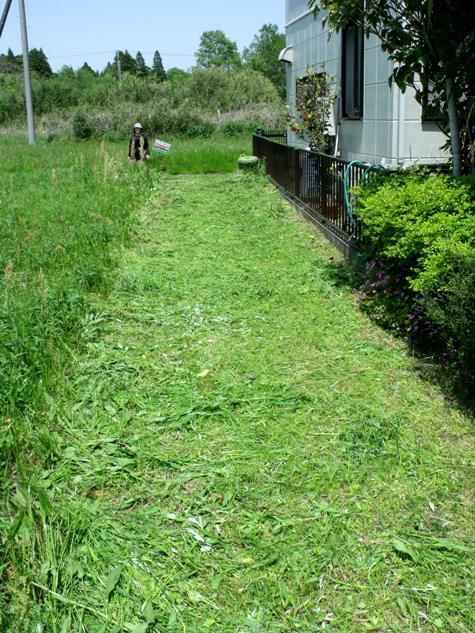 画像ー222初夏の庭の風景 051-2