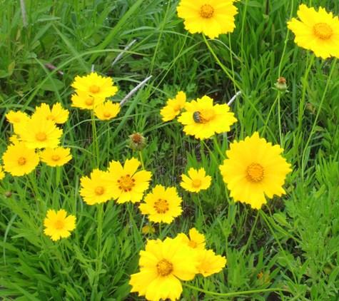 画像ー230初夏の風景 014-2