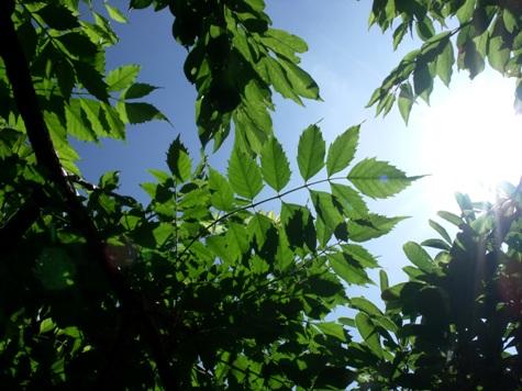 画像ー236初夏の月と草花 061-2
