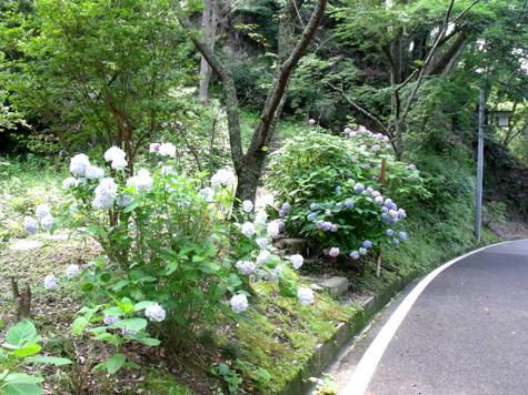 画像ー243大多喜城と薬医門 096-2