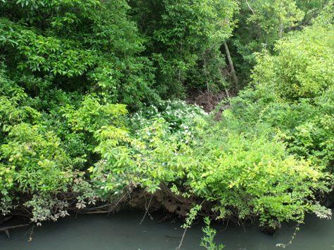 画像ー244新しい品種の植物 040-2