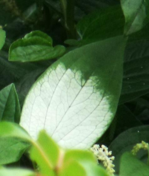 画像ー244新しい品種の植物 050-3