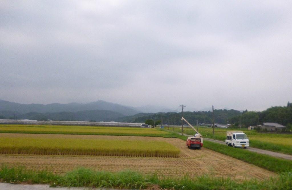 宮崎新米img_0
