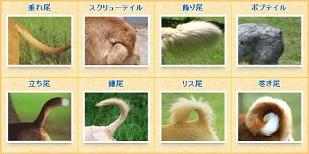 tail2.jpg