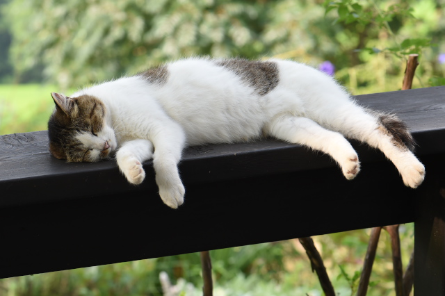 cat-07-26-2014-01.jpg