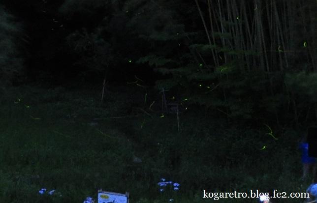 野木町ホタル観賞会3