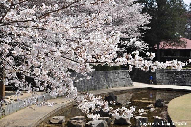 ネーブルパーク桜