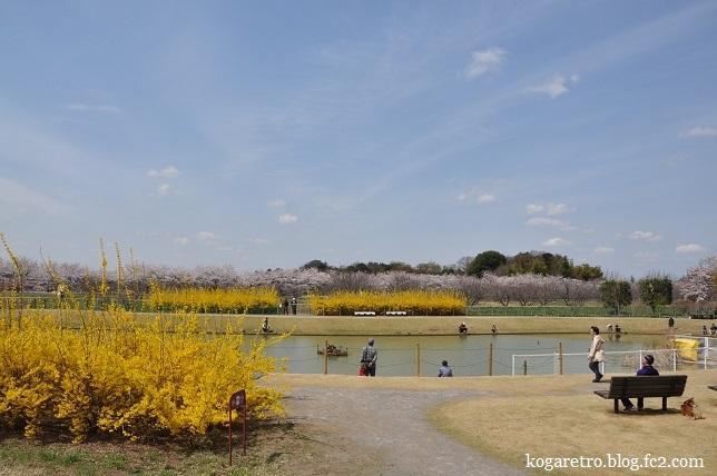 ネーブルパーク桜2