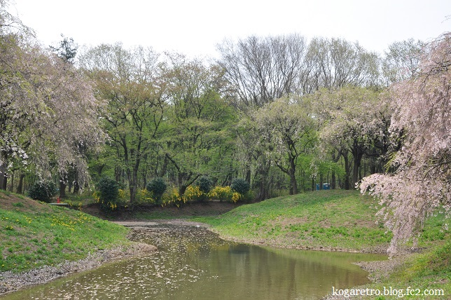 結城農場桜3