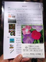 種まきー2014・4・28_R