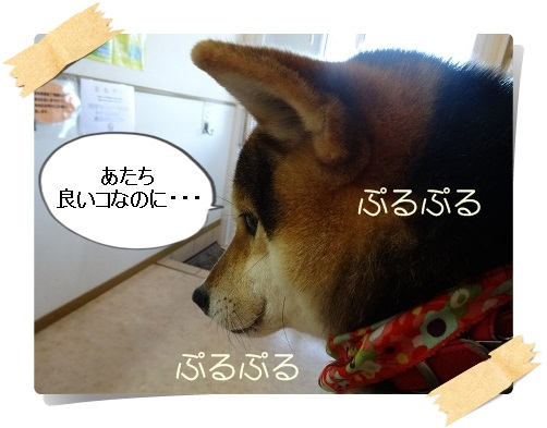 komaro20140404_9