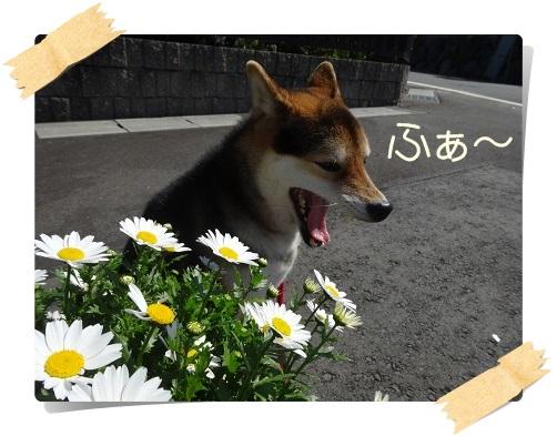 komaro20140323_6.jpg
