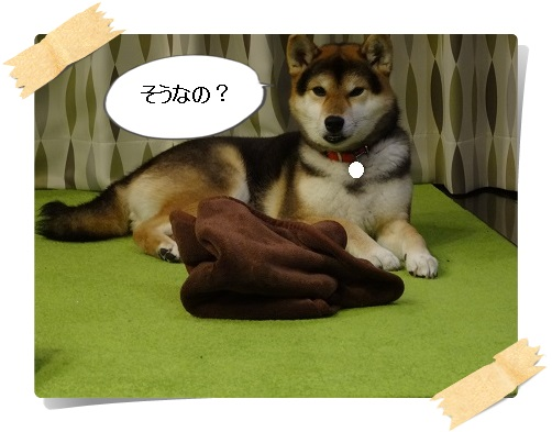 komaro20140326_6.jpg