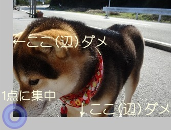 komaro20140402.jpg