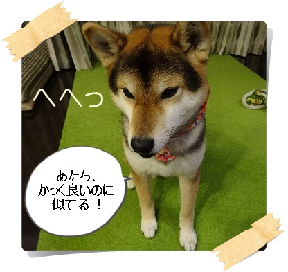 komaro20140402_3.jpg