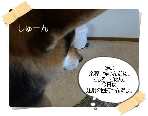komaro20140404_11.jpg