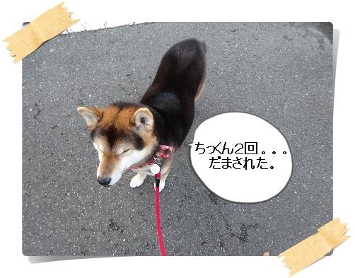 komaro20140404_12.jpg