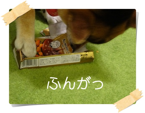 komaro201405026_5.jpg