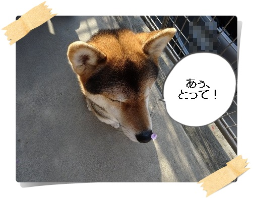 komaro20140503_10.jpg