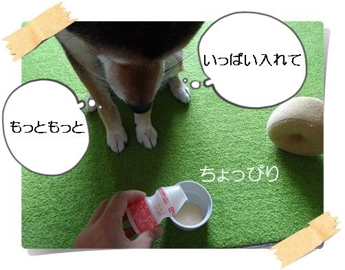 komaro20140701_8.jpg
